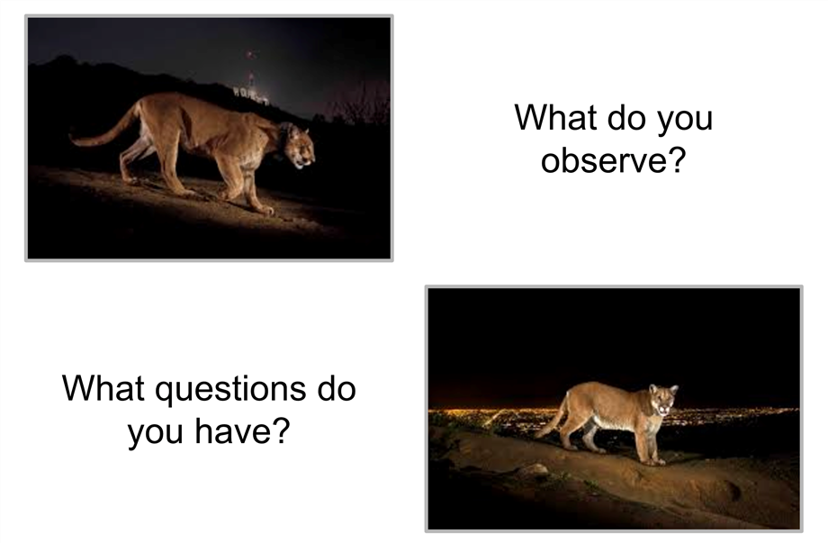 What do you observe? What questions do you have?